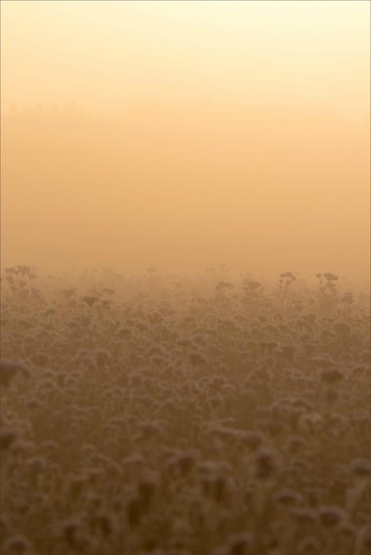 Gatine Ménigoute brume champ chardons soleil levant 271017
