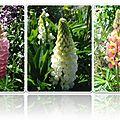 Fleurs 2009-2010 (29)