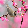 bird_at_spring