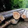 troncs coupés
