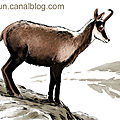 Chamois animal prehistoire