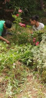 Oussama et Nuhayla désherbent autour des rosiers