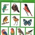 oiseaux et autres animaux au point de croix