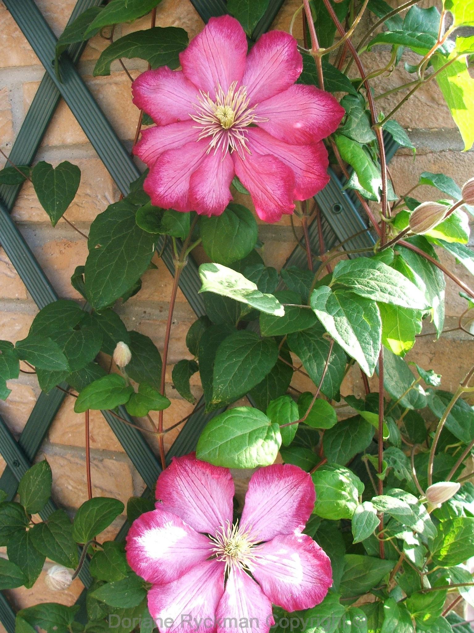 fleur1copy