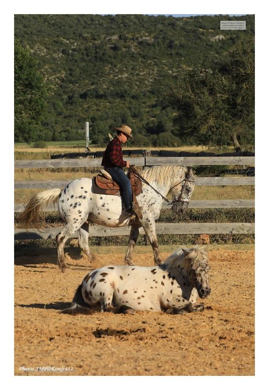 Photos JMP©Koufra 12 - El Rancho - Le Mas de Sisco - 18082020 - 0108