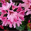 De la couleur... des fleurs