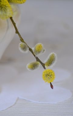 spring_001