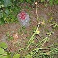 Chemins ruraux de villé : le wirbelspach (1)