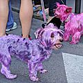 Chiens roses - gay pride - paris