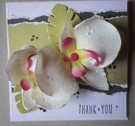 carte orchidées