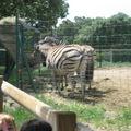 zoo 054