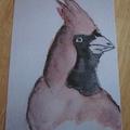 Carte Postale - L'oiseau rouge (2)