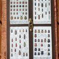 84~Cabinet des curiosités pour Dani