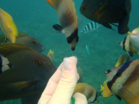 032_Main_poissons