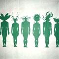 Humansectes