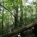 Sous-bois de Forêt sempervirente