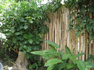 mon_jardin