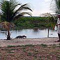 îlot aux caimans