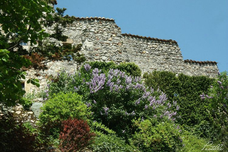 Pérouges lilas_8274