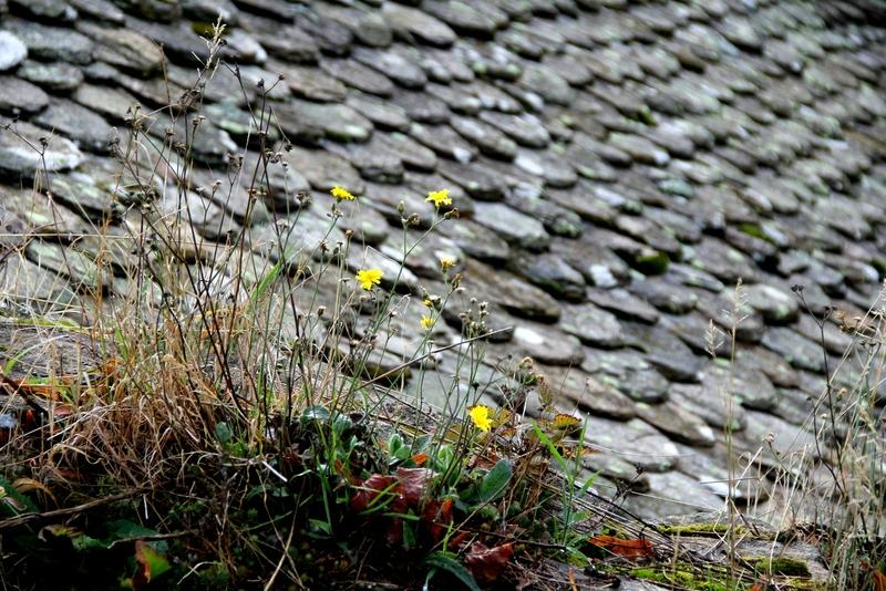 IMG_7113 flrs jaunes toit de lauzes AB