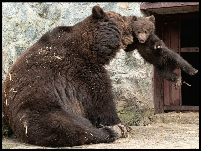 bebe ours & maman ours 2