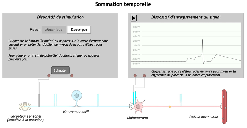 sommation temporelle