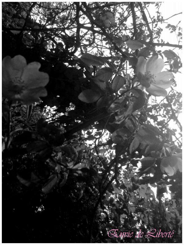 Arbustes et plantes grimpantes