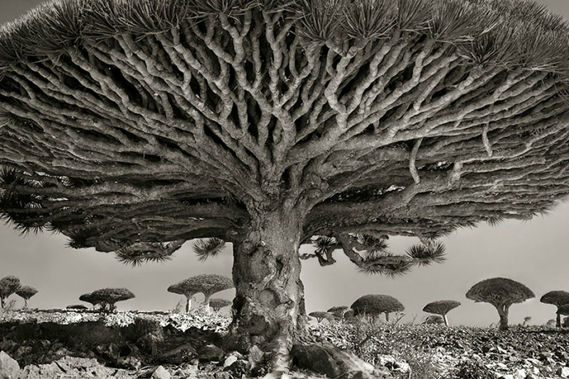 Ancien-arbre-1