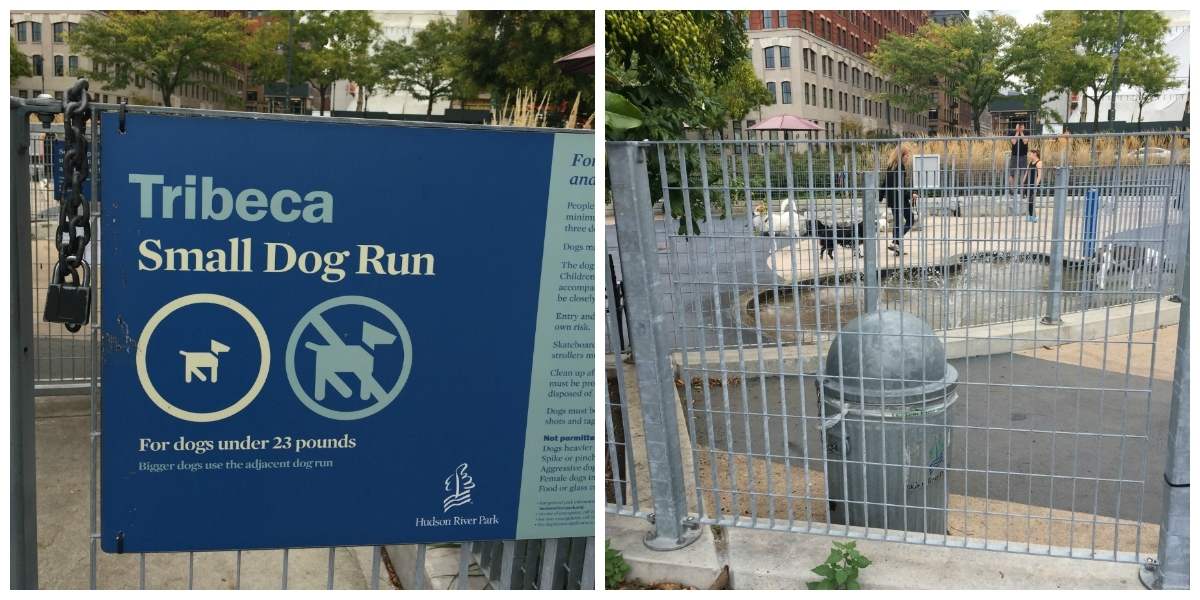 espace pour chiens NY