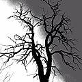 arbrenoirblanccopy