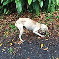 chienne squelettique à la traversée 1