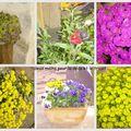 Quelques fleurs et plantes autour de la maison