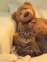 parrainer un chat ou chaton - les chabadas3