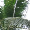 Terra Botanica - Juillet 2010