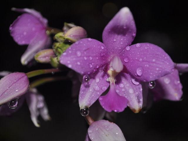 Orchidee du jardin