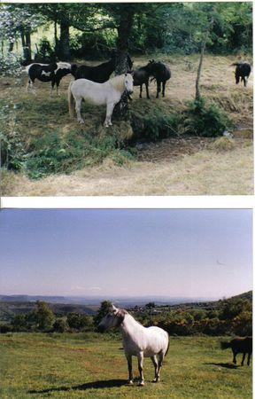 poney 5