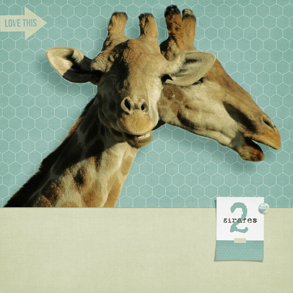 15-02 deux girafes