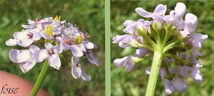 fleurs toutes insérées au même niveau