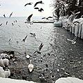 Oiseaux_12 13 02_1746
