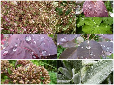 perles de pluie1