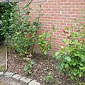 mai-2005-jardin 011