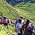 Rencontres Tamoul - champs de thé - Haputale