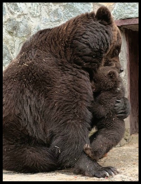 bebe ours & maman ours 4