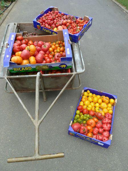 26-récolte serre du jour-37kgs (8)