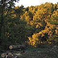 arbres_doporo