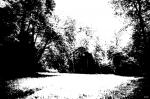 clairière
