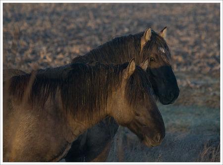 chevaux_MP_121208