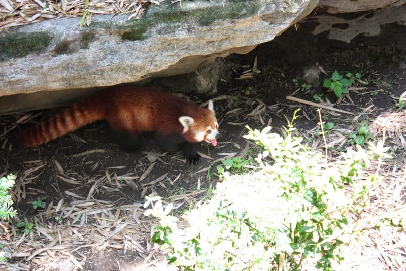 J11 - 08 juillet 2014 - zoo du Bronx (136).JPG
