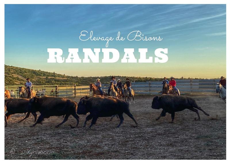 Randals Bisons