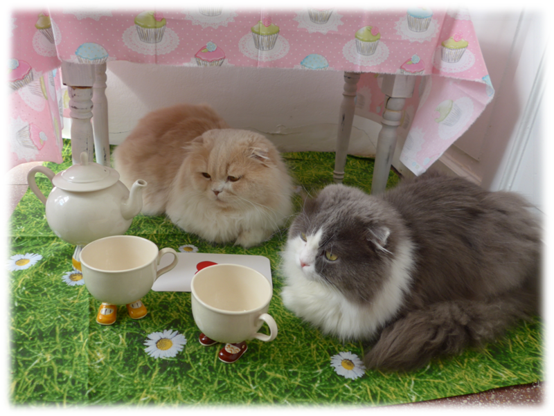 deux gros chats1